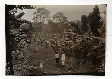 PHOTO DE PRESSE M. BRANGER Plantation Bananiers Congo ? Afrique Colon Cocotier