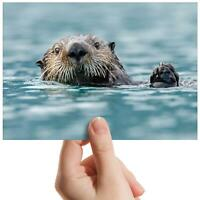 "Sea Otter Wildlife Sea Animal Small Photograph 6""x4"" Art Print Photo Gift #14162"