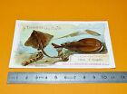 CHROMO CHOCOLAT AIGUEBELLE 1908-1912 POISSONS MER RAIE TORPILLE FISH FISCHE