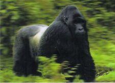 3 -D - Ansichtskarte: Berggorilla - Mountain Gorilla, Ruanda, Afrika