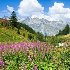 Urlaub Deal Alpen Schweiz Engadin | 3* Hotel Gutschein 3 Nächte 2P + 2 Kinder
