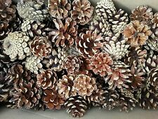 100 Small  Pine Cones 2,5,-3, 5 cm professional quality natural.