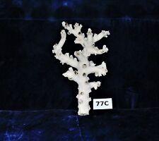 "6""  BEAUTIFUL REAL  OCTOPUS CORAL, BEACH  DECOR TROPICAL AQUARIUM #77C"