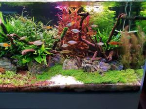 plantas acuario natural muchas variedades envio 24h