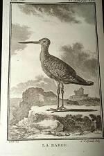 LA BARGE GRAVURE BUFFON 1780 OISEAUX