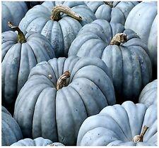 (5) Jarrahdale Blue Pumpkin, Cucurbita maxima Seeds - FRESH RARE - Combined S&H