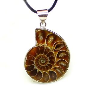 Polished Ammonite Fossil Pendant On Black Cord Necklace