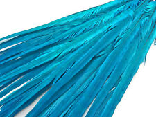 """USA Pheasant Feathers, 20-22"""" Turquoise Blue Ringneck Tail Feathers - 50 Pieces"""