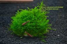 Aquarium Plant Net - Attach Moss Wire Mesh Stone Wood Live Plant,fish tank