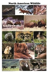 NORTH AMERICAN WILDLIFE POSTER (61X91CM) EDUCATIONAL CHART NEW HUNTING ANIMALS