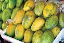karthakolomban /Willard Colomban,any 3 Seed 100% fresh Organic Live seeds 3
