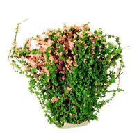 Sand Table Shrub Thicket Spend Plant Flower Garland Decor DIY Decor Pink HY