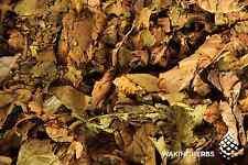 75 GR Yellow Banisteriopsis Caapi  Vine Cielo Strain DRIED LEAVES