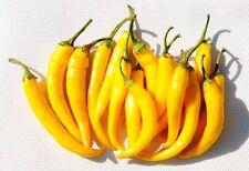 "Ungarische Paprika ""Feuerscharf"" , gelbe scharfe Schotenpaprika, 10 Samen"