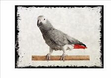 African Grey Parrot Vintage Style  Wall Plaque Cage Bird Picture  Aviary Sign