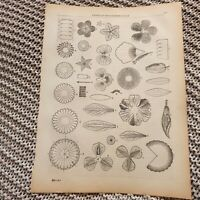 Paper Flower Making - 1881 Book Page