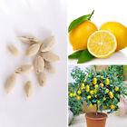10Pcs Rare Heirloom Lemon Tree Available Heirloom Fruit Seeds Love Fruit Garden