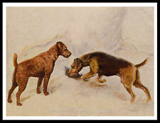 Airedale And Irish Terrier Dogs Great Vintage Style Dog Print Poster