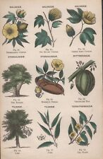 1878 Reino Vegetal-mar isla de algodón, Monkey's Pan, planta de té