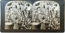 Keystone Stereoview of Blacks Picking Cotto in GEORGIA from 1930's T400 Set #A