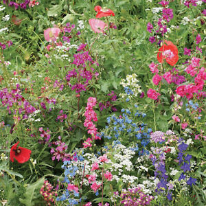 Wildflower Mixed Flower Seeds Suitable for Shaded Areas - 500 Seeds