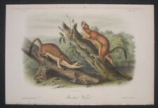 1851 Audubon 1st Ed Octavo Quadruped of Bridled Weasel