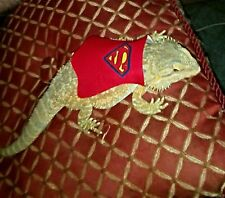 Lil' Bestie Superman Cape for Bearded Dragons and small reptiles