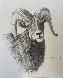 Bighorn Sheep drawing  original  8x10 wildlife southwestern art Gary White