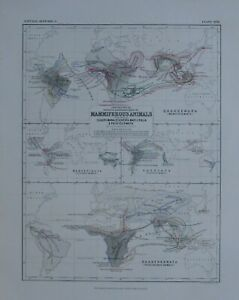 1850 HAND COLOURED MAP WORLD MAMMIFEROUS ANIMALS POUCHED TOOTHLESS MONKEYS MAKIS