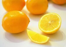 Meyer Lemon (5 seeds) fresh this season's harvest from my garden{Delicious}