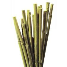 13 Bamboo Canes Plant Sticks, Plants  Support Flower Cane 2ft(buy2get5stick free