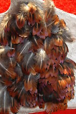 PHEASANT FEATHERS 75 HEART LOOSE HAND SELECTED FLYS  ART CRAFTS