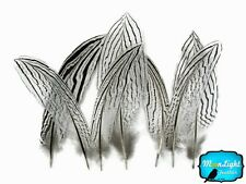 "10 Pieces 6-8"" Black & White Silver Pheasant Tail Feathers Barred Smudging Wing"