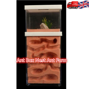 Ant Box Nest Ant Farm Landscaping Housing For Ant Colony 10*8*15cm
