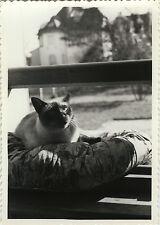 PHOTO ANCIENNE - VINTAGE SNAPSHOT - ANIMAL CHAT FENÊTRE COUSSIN - CAT WINDOW