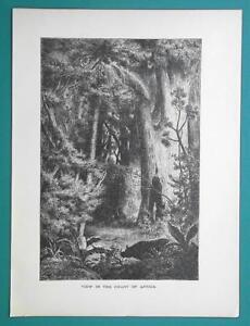 AFRICA Scene in Jungle Rain Forest - 1877 Wood Engraving Illustration