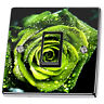 Green Rose with Dew Light Switch & Power Socket Stickers skin decal vinyl cover