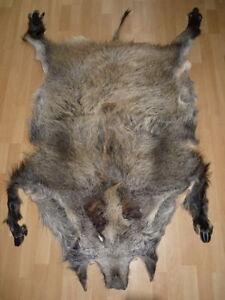 XXL Wildschwein Wildschweinfell Schwarzwild Schwarte NEU