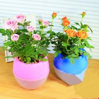 100 Pcs Seeds Mini Rose Bonsai Miniature Cute Plants Garden Potted Flower NEW X