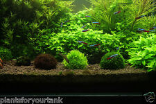 Submerged ball for growing moss