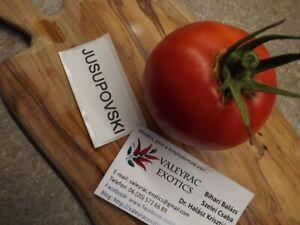 Jusupovski Tomate aus Russland - Tomato 5+ Samen - Saatgut - Seeds
