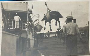RPPC of Horse being loaded in the Philipines. Navy loading Army Horses- unposted