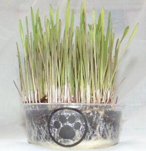 Premium Indoor Pet HAPPY CAT Rye Grass Growing Complete Kit +Bonus Extra Refill