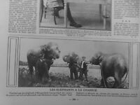 1916 Elefantes Arado Arar Campos Tarn-Et-Garonne Excelente Mano De Obra