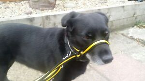 HI VIS ALL IN 1 STOP PULLING HALTER / HEAD COLLAR SAFETY CLIP TO COLLAR
