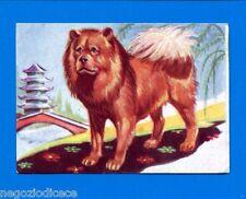 ANIMALI - Lampo 1964 - Figurina-Sticker n. 65 - CHOW CHOW -New
