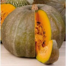Pumpkin gourmet SWEET Seeds Spanish Calabaza