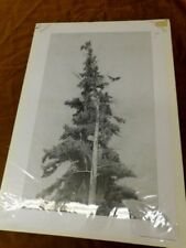 RON PATTERN BALD EAGLE TREE PRINT 120/450 SIGNED NUMBERED COA 21X32