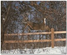 Whitetail Deer Jumping Fence Wildlife Animal Wall Decor Art Print Poster (16x20)