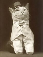 VINTAGE PHOTOGRAPHY CAT IN A HAT AND CRAVAT LARGE WALL ART PRINT POSTER LF2370